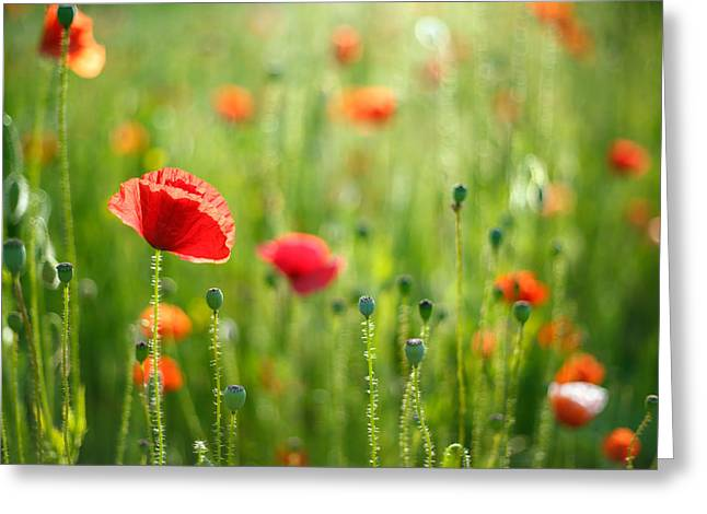 Back Photographs Greeting Cards - Dreamscape - Field of Poppies Greeting Card by Roeselien Raimond
