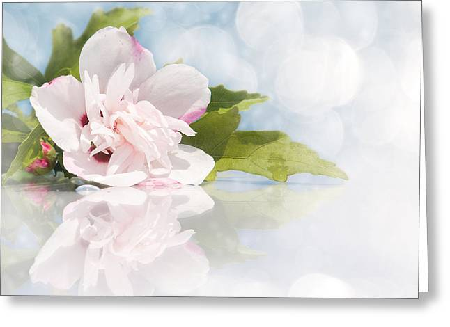 Pink Althea Greeting Cards - Dreamy Althea Greeting Card by Sari ONeal