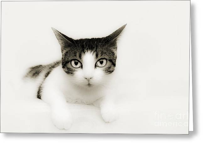 Cute Mixed Media Greeting Cards - Dreamy Cat Greeting Card by Andee Design