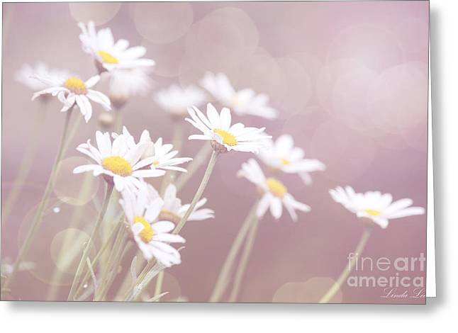 Lindalees Greeting Cards - Dreamy Daisies Greeting Card by Linda Lees