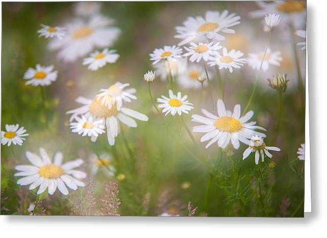 Spa Center Greeting Cards - Dreamy Daisies on Summer Meadow Greeting Card by Jenny Rainbow