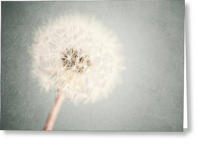 Lisa Russo Greeting Cards - Dreamy Dandelion in Pastel Blue and Cream  Greeting Card by Lisa Russo