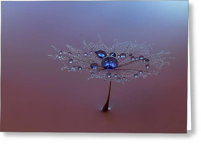 Dreamy Dandelion Two Greeting Card by Silke Tuxen