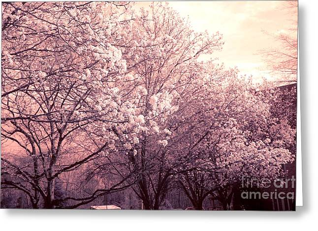 Dreamy Pink Nature Photos By Kathy Fornal Greeting Cards - Dreamy Ethereal Pink and White South Carolina Trees Blossoms Greeting Card by Kathy Fornal