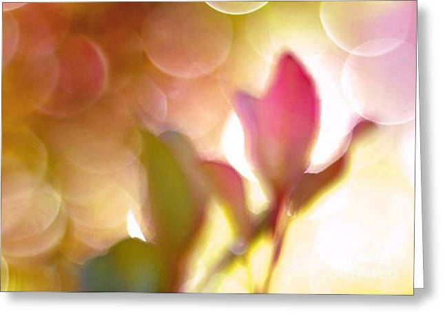 Fantasy Art Greeting Cards - Dreamy Ethereal Pink Tulip Bokeh Circles Greeting Card by Kathy Fornal