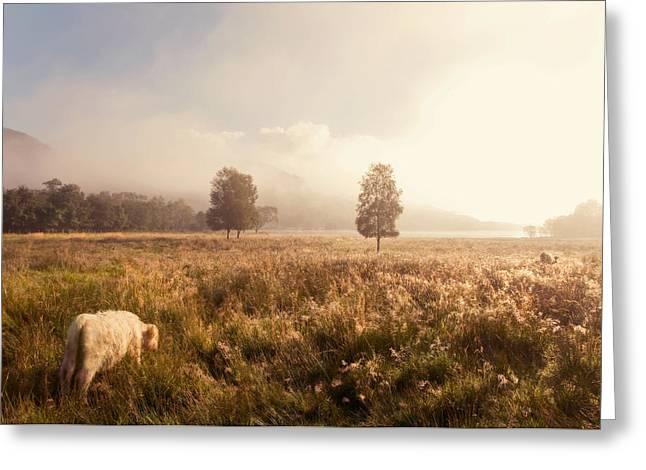 Evgeniya Vlasova Greeting Cards - Dreamy Fields. The Trossachs. Scotland Greeting Card by Jenny Rainbow