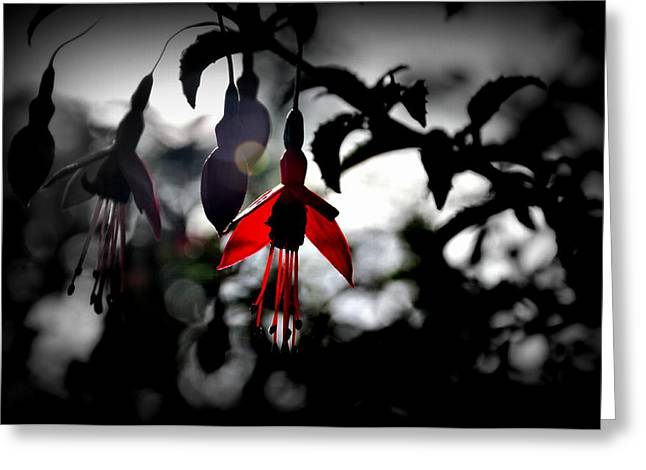 Dreamy Fuchsia Greeting Card by Florian Walsh