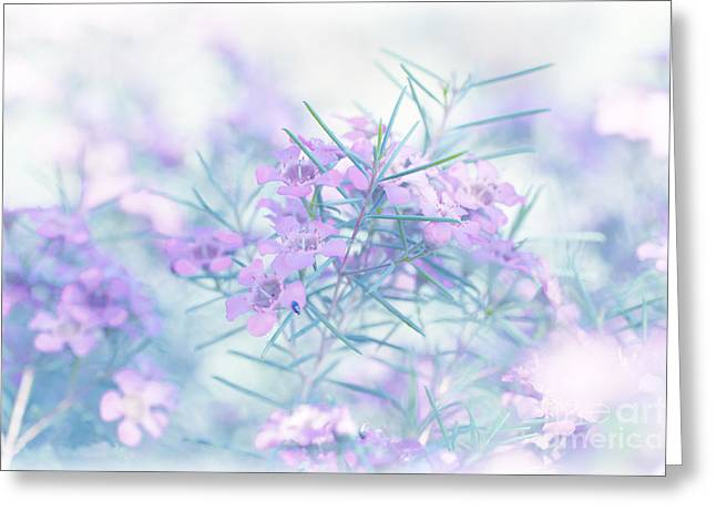 Australian Native Flora Greeting Cards - Dreamland Greeting Card by Aeve Pomeroy