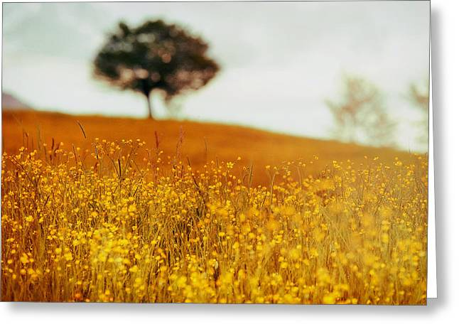Italian Landscapes Greeting Cards - Dreamy Italian Meadow Greeting Card by Mountain Dreams