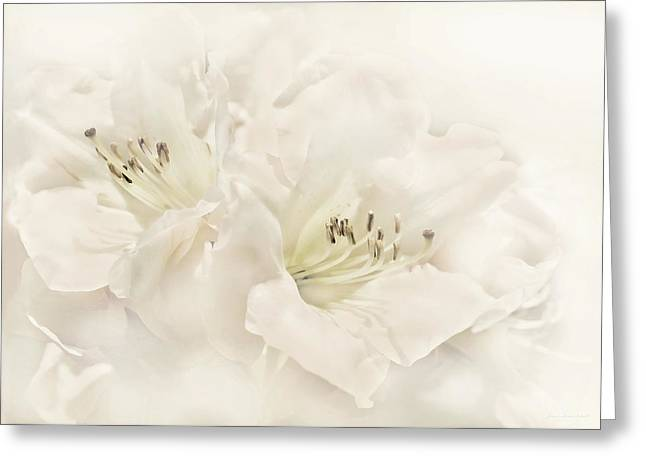 Ivory Flower Greeting Cards - Dreamy Ivory White Azalea Flowers Greeting Card by Jennie Marie Schell