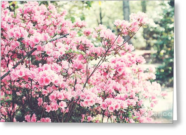 Dreamy Pink Nature Photos By Kathy Fornal Greeting Cards - Dreamy Pink South Carolina Apple Blossom Trees - South Carolina Vintage Pastel Pink Blossoms Tree Greeting Card by Kathy Fornal