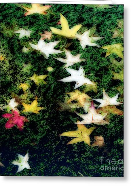 Autumn Colors Greeting Cards - Dreamy Pond Greeting Card by Inge Johnsson