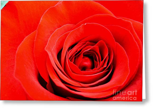 Bittersweet Greeting Cards - Dreamy Red Rose Greeting Card by Nina Ficur Feenan