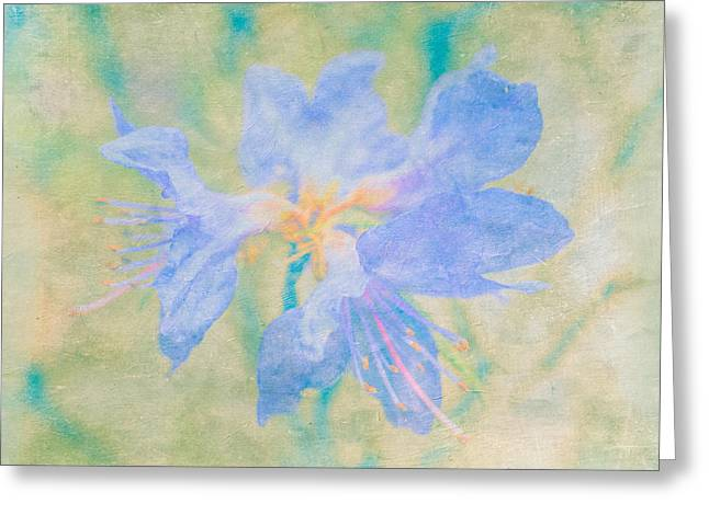 Rhodendron Greeting Cards - Dreamy Rhododendron Bloom Art Greeting Card by Priya Ghose