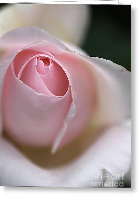 Joy Watson Greeting Cards - Dreamy Rose Greeting Card by Joy Watson