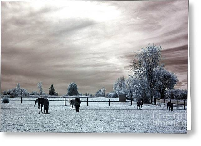 Pasture Framed Prints Greeting Cards - Dreamy Surreal Infrared Horse Landscape Greeting Card by Kathy Fornal