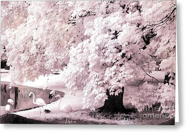Fantasy Surreal Fine Art By Kathy Fornal Greeting Cards - Dreamy Surreal Pink White Infrared Pink Flamingos In Pond - Pink Flamingos Dreamy Nature Landscape Greeting Card by Kathy Fornal