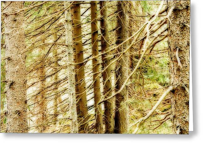 Alberi Greeting Cards - Dreamy Trees Greeting Card by Maurizio Incurvati