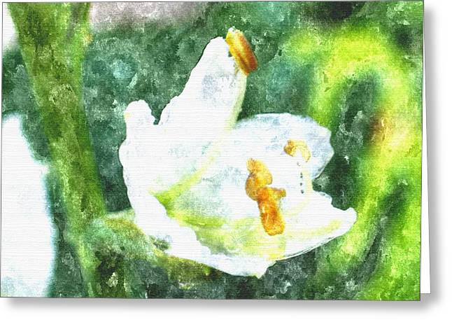 Lake House Drawings Greeting Cards - Drenched In White Flowers V  Macro Greeting Card by Rosemarie E Seppala