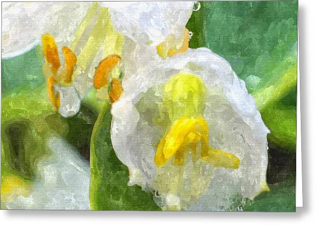 Entryway Drawings Greeting Cards - Drenched In White IV Hosta Flowers Macro Greeting Card by Rosemarie E Seppala