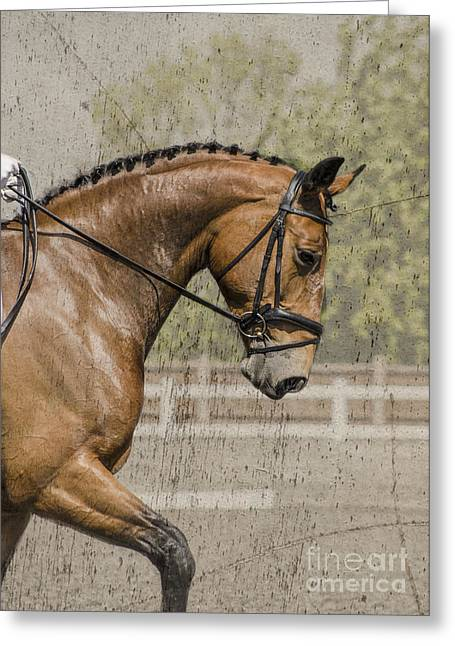 Woman Head Greeting Cards - Dressage horse  Greeting Card by Linsey Williams