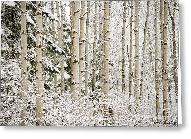Birch Grove Greeting Cards - Dressed in White Greeting Card by Idaho Scenic Images Linda Lantzy