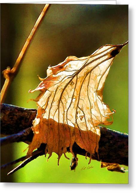 Bill Kesler Greeting Cards - Dried But Still Beautiful Greeting Card by Bill Kesler