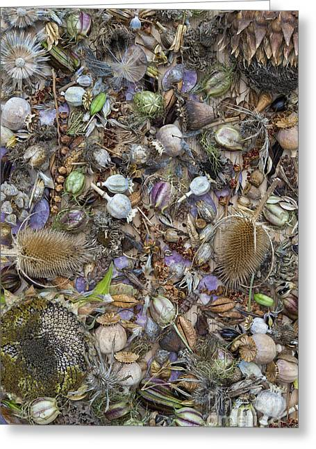 Dried Flower Seeds Greeting Card by Tim Gainey