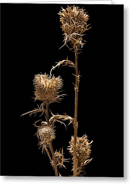 Blaze Greeting Cards - Dried Prairie Blazing Star Greeting Card by Steve Gadomski