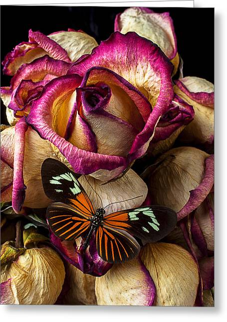 Blushing Greeting Cards - Dried rose and butterfly Greeting Card by Garry Gay