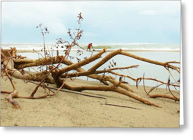 On The Beach Pyrography Greeting Cards - Drift Beauty Greeting Card by Mike Sangh
