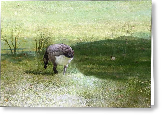 Androscoggin Greeting Cards - Drifter Greeting Card by Mike Breau