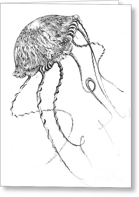 Wild Life Drawings Greeting Cards - Drifter Greeting Card by Penelope Fedor