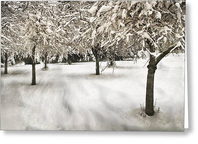 Drifting Snow Greeting Cards - Drifting Greeting Card by John Anderson