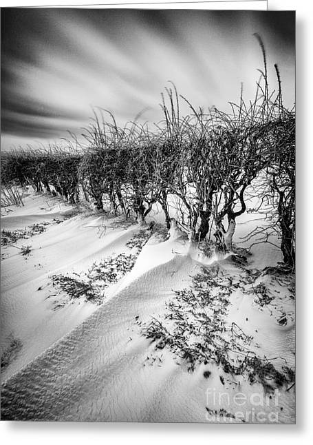 Snow Drifts Greeting Cards - Drifting Greeting Card by John Farnan