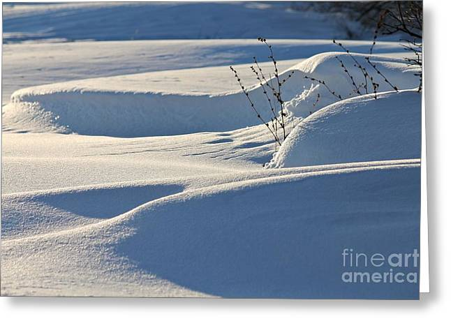 Drifting Snow Greeting Cards - Drifting Greeting Card by PhotoClique