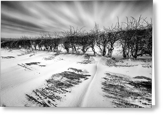 Snow Drifts Greeting Cards - Drifting snow Greeting Card by John Farnan