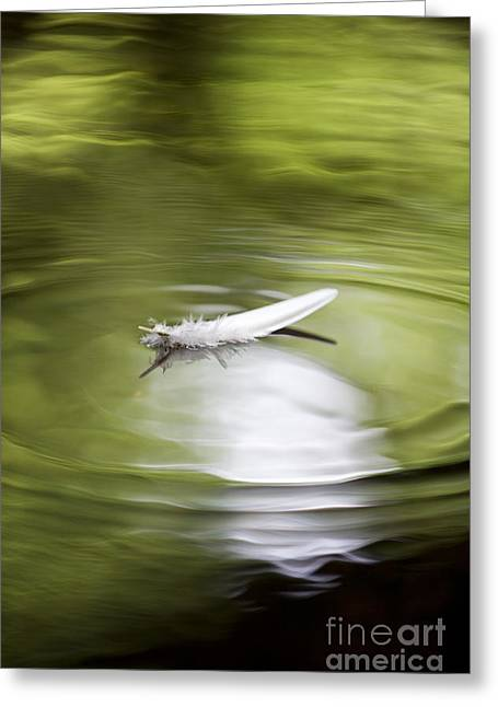 White Feather Greeting Cards - Drifting Greeting Card by Tim Gainey