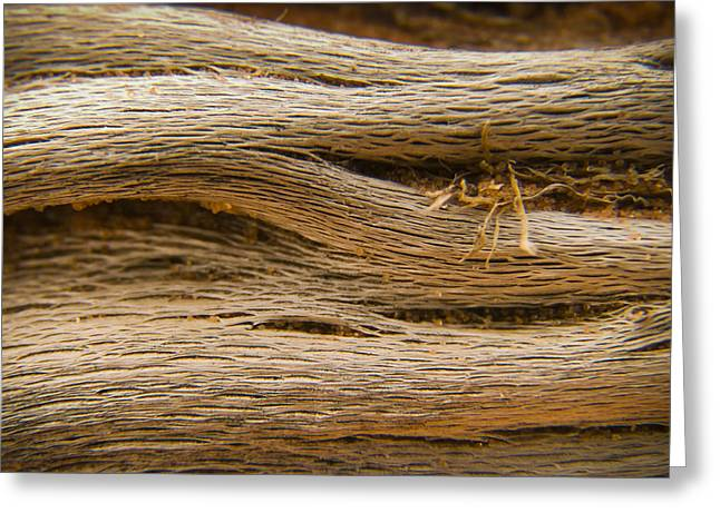 Wood Grain Greeting Cards - Driftwood 1 Greeting Card by Adam Romanowicz