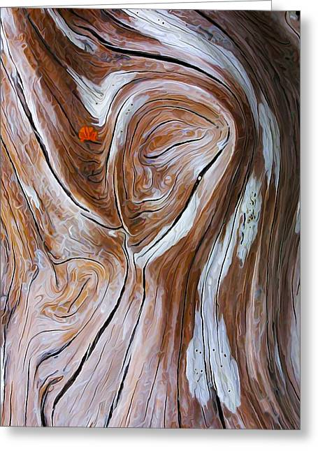 Abstract Nature Greeting Cards - Driftwood 6 Greeting Card by Bill Caldwell -        ABeautifulSky Photography