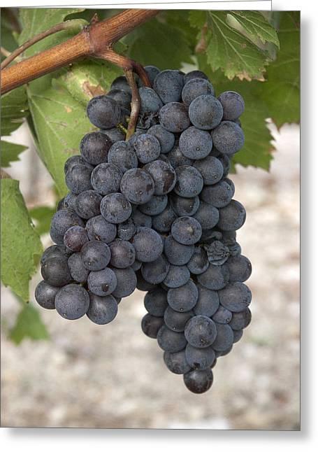 Grape Vineyard Greeting Cards - Driftwood 6 Greeting Card by Robert Anschutz