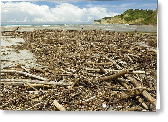 Ocean Landscape Greeting Cards - Driftwood after a storm, Ecuador Greeting Card by Science Photo Library