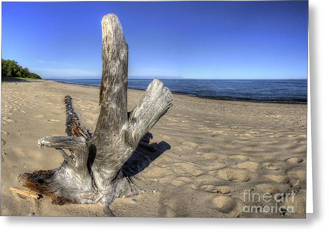 Superior Sunrise Greeting Cards - Driftwood at Pictured Rocks Greeting Card by Twenty Two North Photography