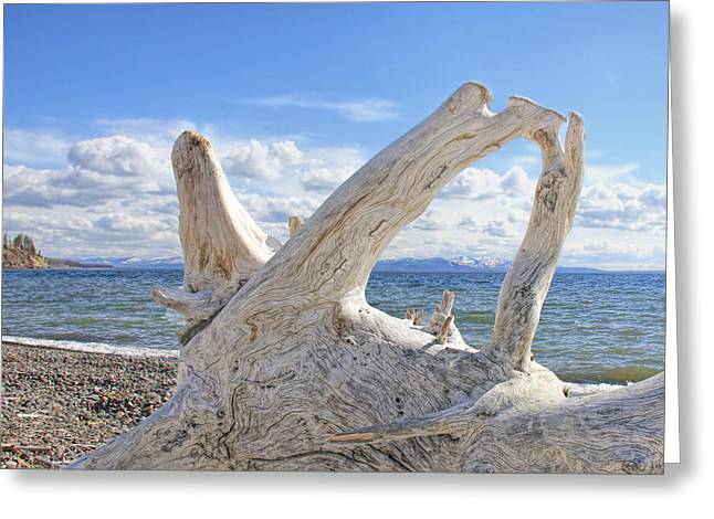 Light And Dark Greeting Cards - Driftwood at Yellowstone Lake  Greeting Card by Jennie Marie Schell