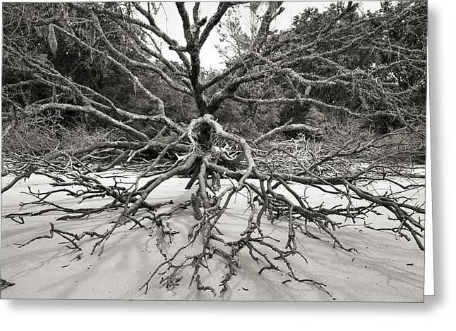 Driftwood Greeting Card by Barbara Kraus - Northrup