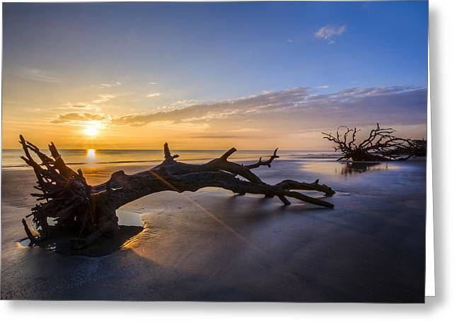 Atlantic Beaches Greeting Cards - Driftwood Beach at Sunrise Greeting Card by Debra and Dave Vanderlaan