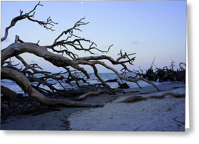 Sea Moon Full Moon Greeting Cards - Driftwood Beach Greeting Card by Laurie Perry