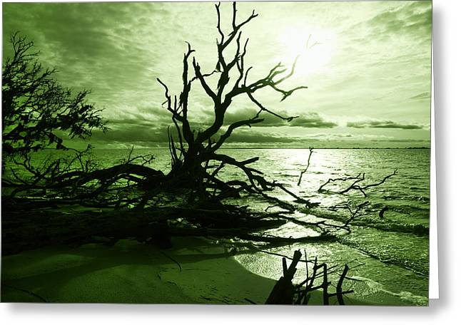Driftwood Beach Greeting Cards - Driftwood Emerald Greeting Card by Betsy A  Cutler