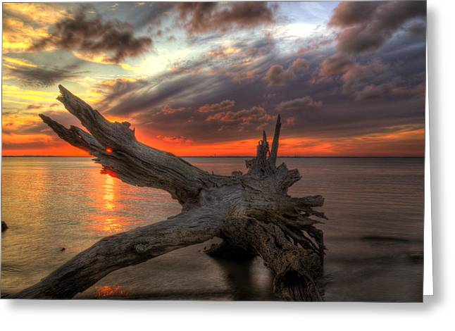 Jekyll Greeting Cards - Driftwood Eye of Fire Greeting Card by Greg and Chrystal Mimbs