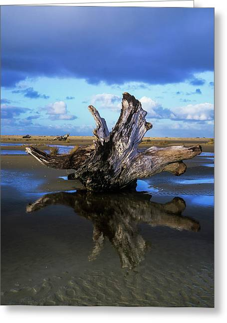 Driftwood Found Near Siltcoos Beach Greeting Card by Robert L. Potts